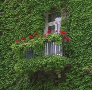 Озеленение: создаем красоту